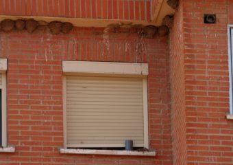 Suciedad bajo los nidos sin Birds Clean