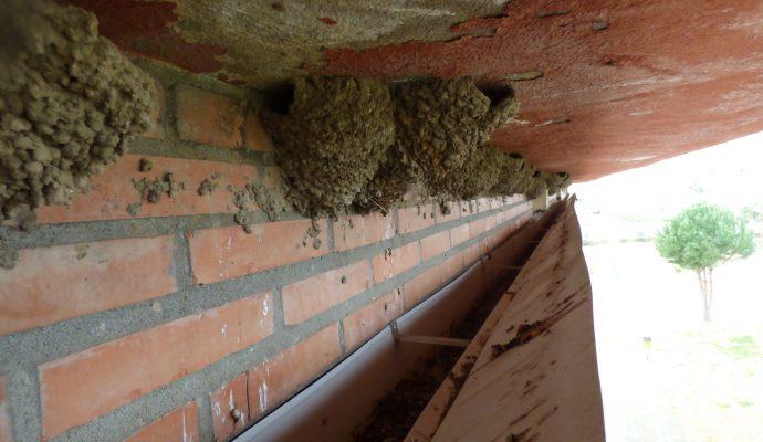 sostenible-birdsclean